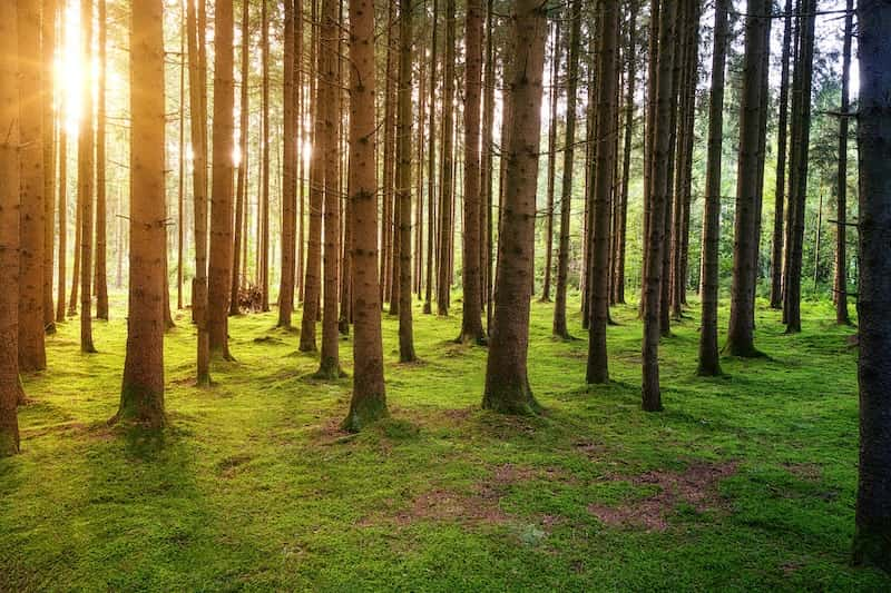 Security for the Big Polluters: Plantation forestry for carbon offset delays action on climate